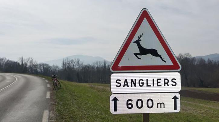 panneau-routier-rigolo-sanglier