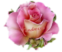 Papiers**Roses Tendresse**