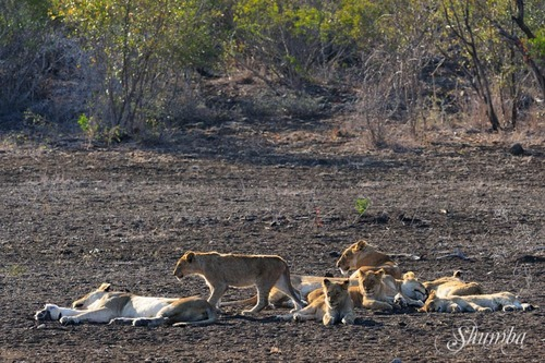 Kruger (Sept 2016): the predators