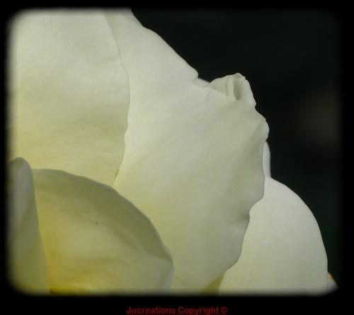 blanc immaculé