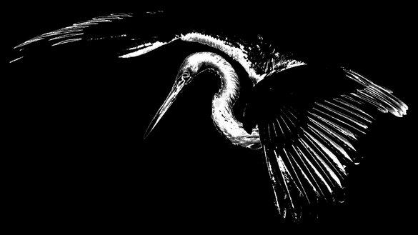 l'oeil & la plume... un oiseau
