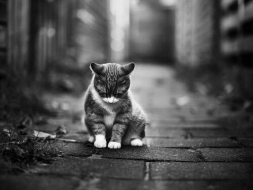 04 - Des chats dans les rues...