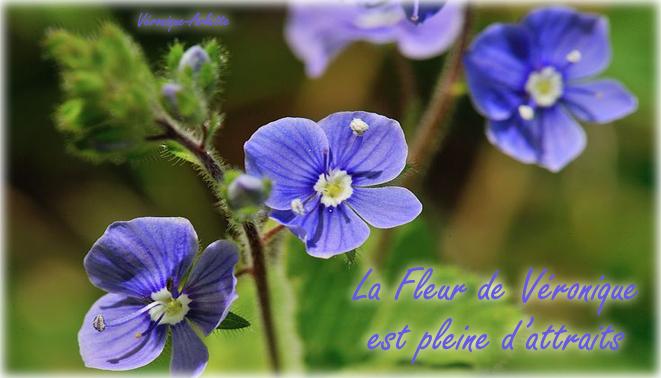 Perle fleurie Véronique