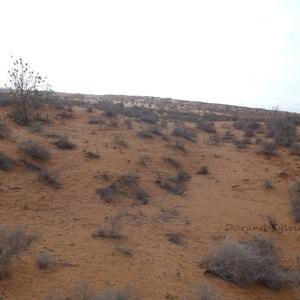 Balade en Dromadaire - Le desert marocain