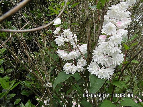 --fleurs-014.JPG