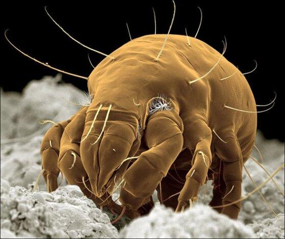 steve gschmeissner05 Incroyables photos au microscope dinsectes et araignées