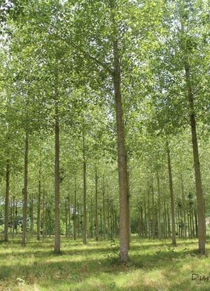 Forêt de Mareuil sur cher (Loir et Cher)