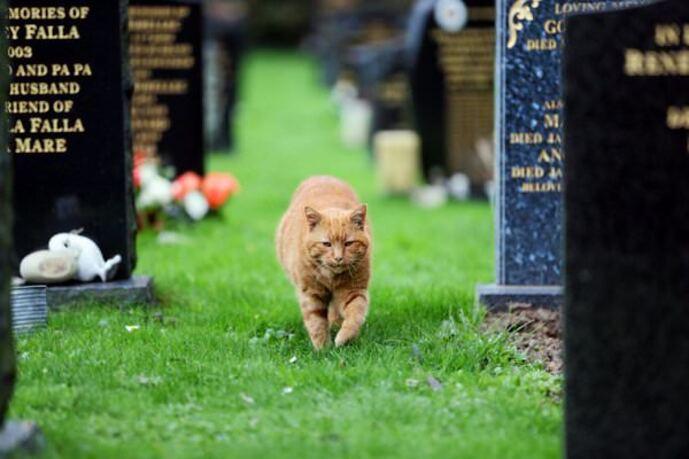 Un_chat_de_cimetière_qui-02