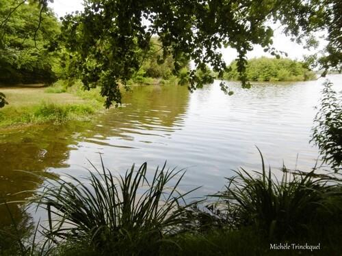 Une balade au Lac le 20 juillet...