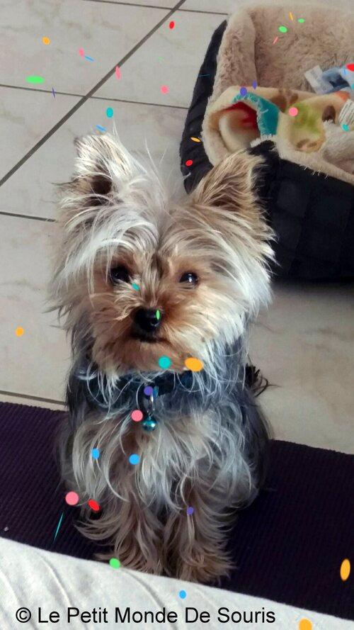 Lola - York Toy