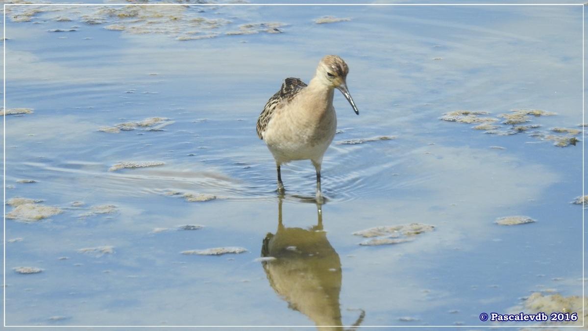 Réserve ornitho du Teich - Septembre 2016 - 5/11