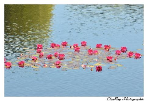 Colleville sur Mer - Calvados -- Normandie - 23 Juin 2015