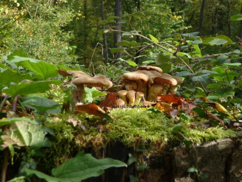 A la recherche de champignons....