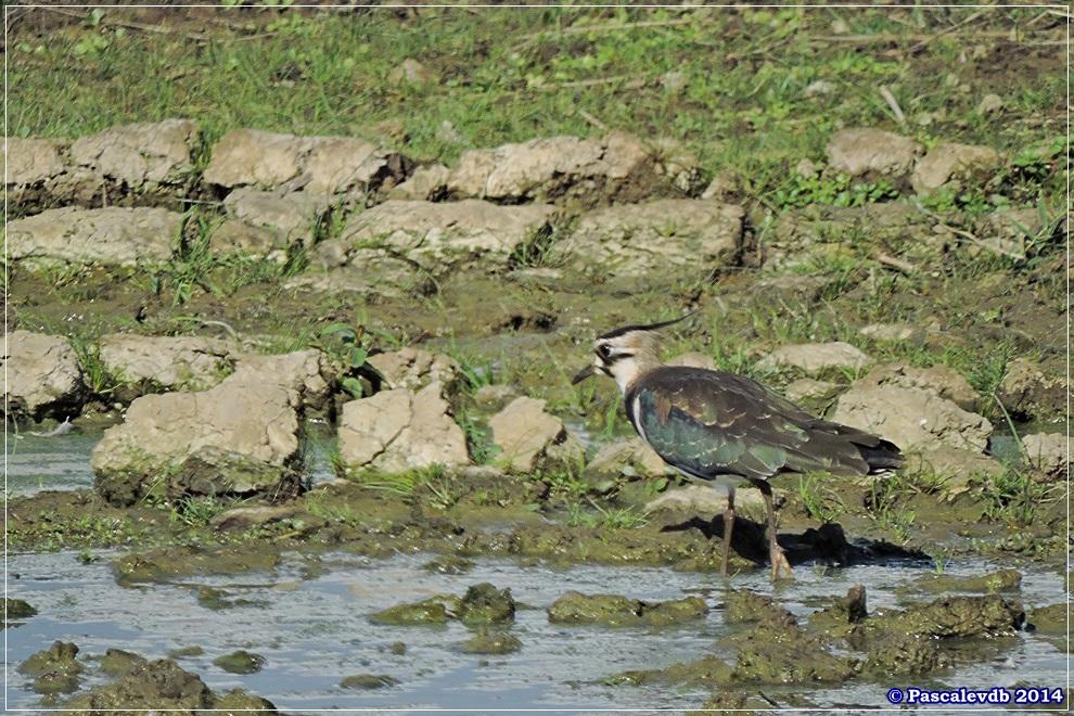 Réserve ornithologique du Teich - 9/10