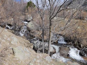 Le long du ruisseau