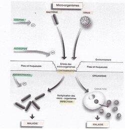 1: les micro-organismes et le risque infecteux