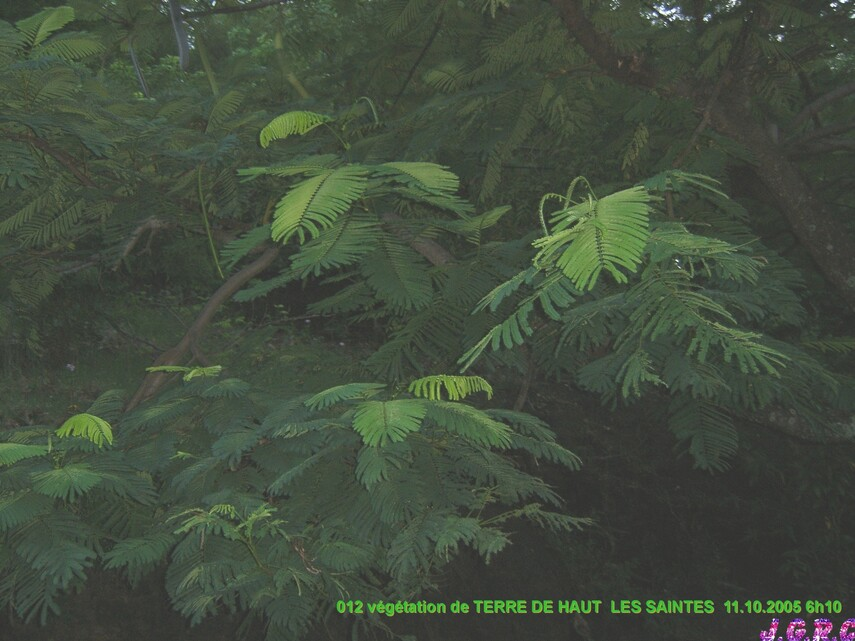 VACANCES GUADELOUPE 1/16 TERRE DE HAUT  10-17/10/2005  D  04/03/2015