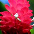 Petite fleur - Gros plan par Renée