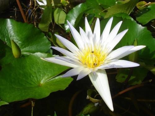 Fleurs comportant le mot 'ROSE'