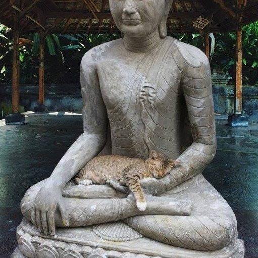 http://ekladata.com/v-8mLOmIvbQF57wfHJnbcSPbImM/Buddha-Chat-FB-Dana-Carter.jpg