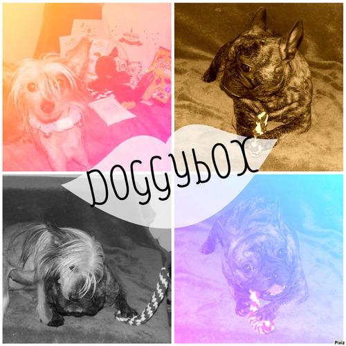 """Box# Doggybox """" Noël """" - Décembre 2014"""