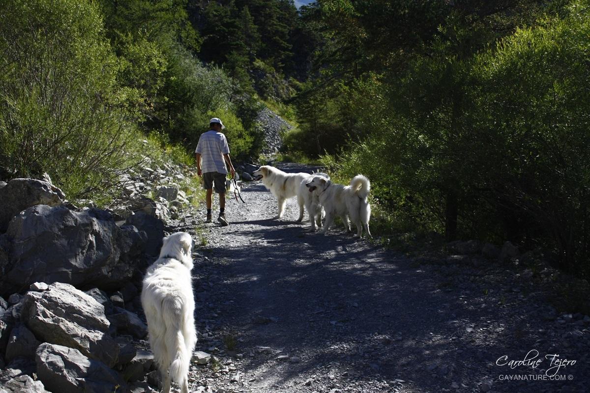 Chemin de l'Estrop, Alpes de Haute-Provence