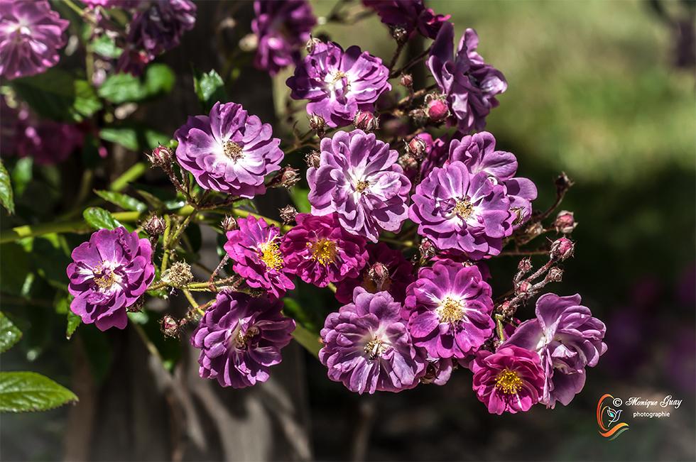 Pentecôte fleurie