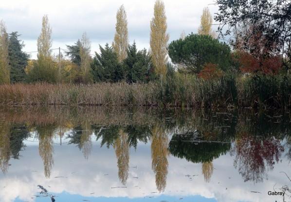 Y09 - Des reflets d'arbres