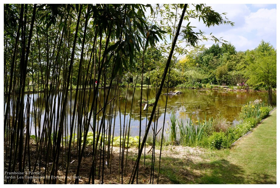 La Bambouseraie à La Fresnay en Retz 44