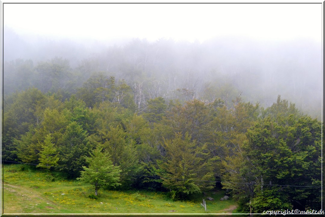 Forêt de Vizzavona - Corse -10-06-2013