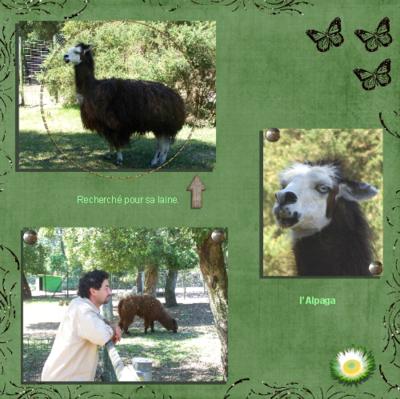 Blog de chipiron :Un chipiron dans les Landes, l'Alpaga