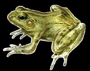 Tubes grenouilles