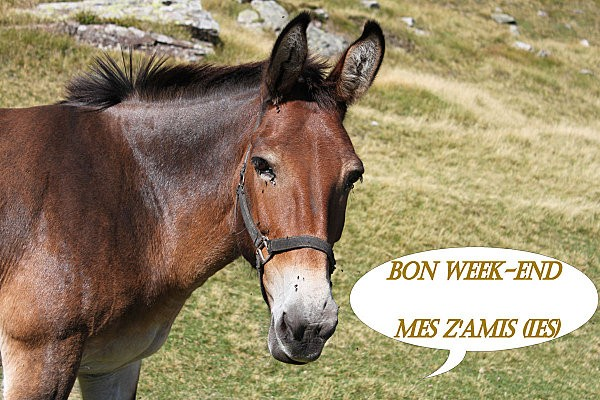 bon week-end mes z'amis(ies)