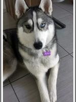 Mylka (6 mois)