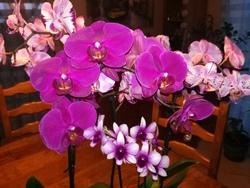 Orchidées pleines de couleurs