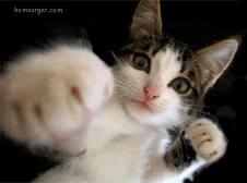 chat-boxeur.gif