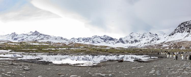 Après Grytviken, on va à...