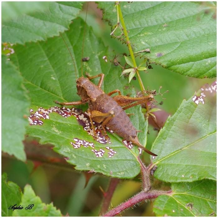 A la recherche des insectes  2.