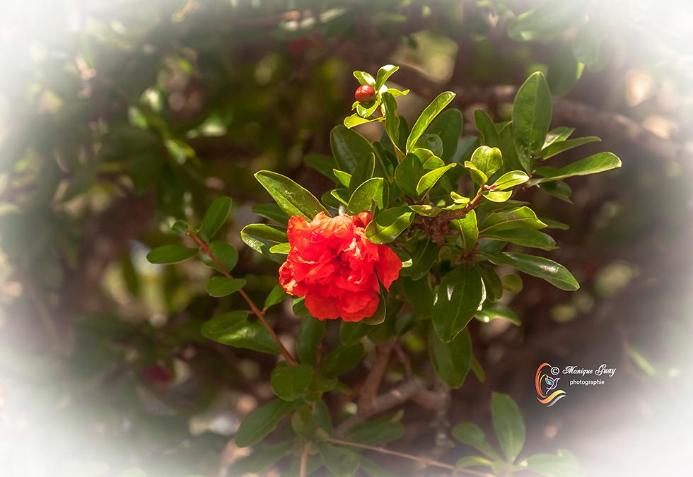 Une rouge solitaire