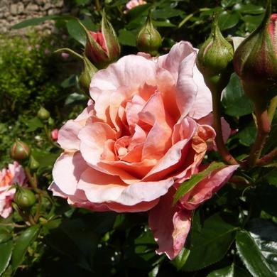Les jardins secrets de Senlis...