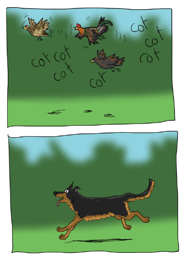 Une envolée de poules
