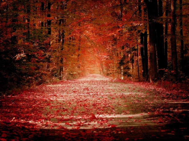 autumn_road - copie