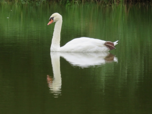 À l'étang de Villetard