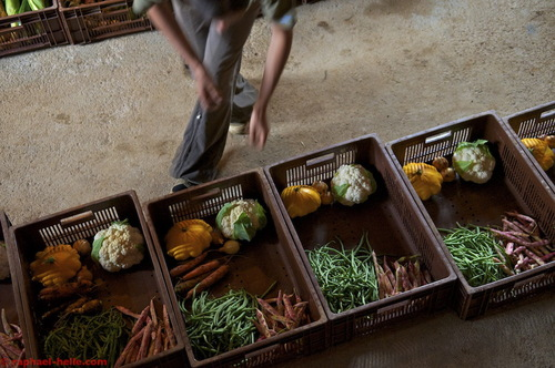 Paniers légumes bio 2014
