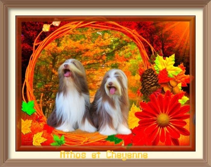 en plein coeur de l'automne