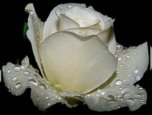 Des femmes et des fleurs..