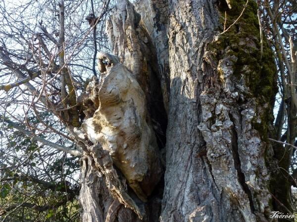 Troncs d'arbres (6)