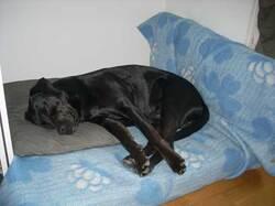 Béatitude canine