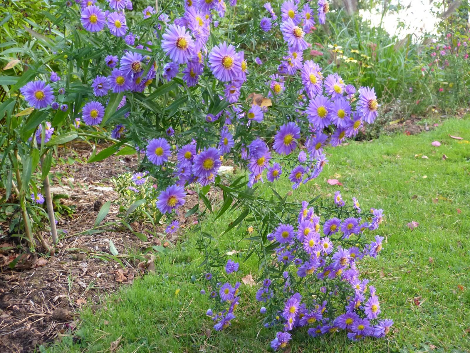 Scenery spring pictures arbuste de printemps fleurs - Arbuste a fleurs bleues ...