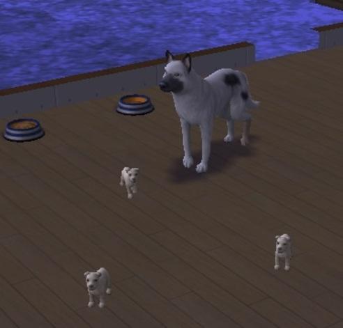Famille Feseis: une histoire de chiens